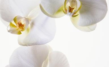 White flowers: Dahlias, flannel flowers, rare waratahs and more