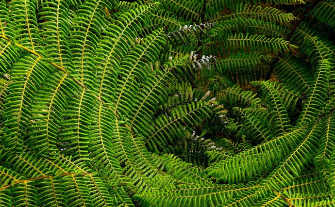 Ferns (Adiantum, Asplenium, Davallia, Nephrolepis, Platycerium and more) thrive in vertical gardens especially in moist shade. Some trail, others form rosettes. Hart's-tongue (Asplenium scolopendrium, pictured) spreads by wiry rhizomes. Mix and match contrasting fronds and plant shapes.