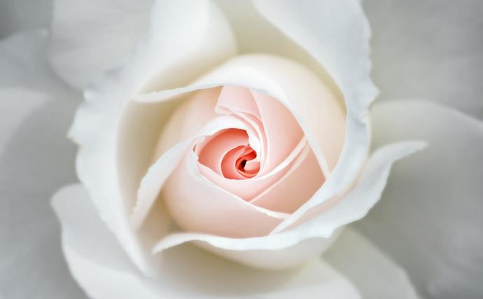 "Modern roses produce flushes of flowers from spring to autumn. Stimulate a good [autumn flower](https://www.homestolove.com.au/autumn-flowers-australia-20296|target=""_blank"") show by [pruning roses](https://www.homestolove.com.au/how-to-prune-roses-9492