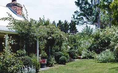 An artist's garden & studio in the Adelaide Hills
