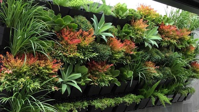 Photographer: Pippi's Plants