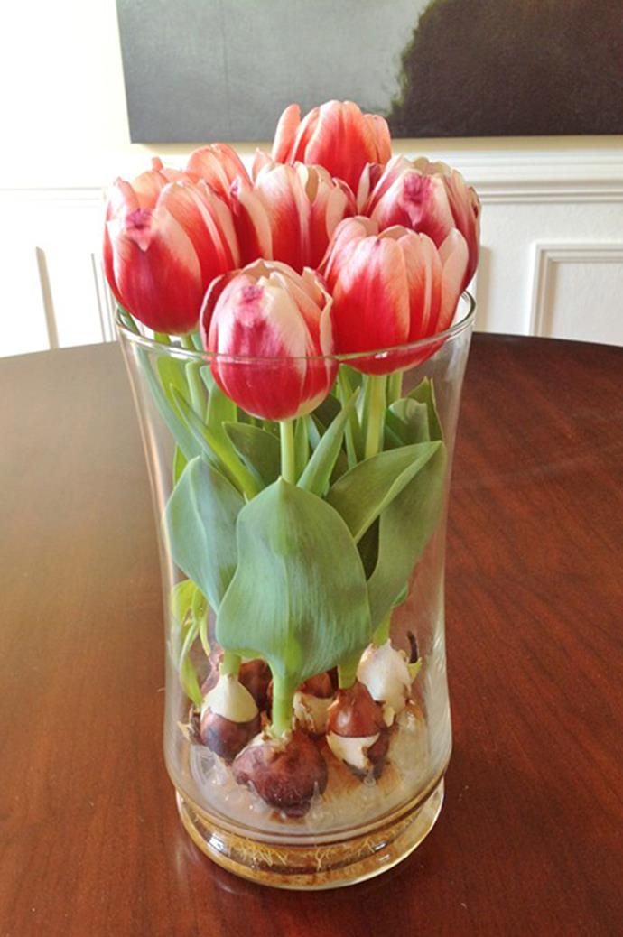 Fill the vase with water but make sure there is no water touching the base of the bulbs.