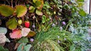 Edible vertical garden: 7 best fruits and vegetables to grow