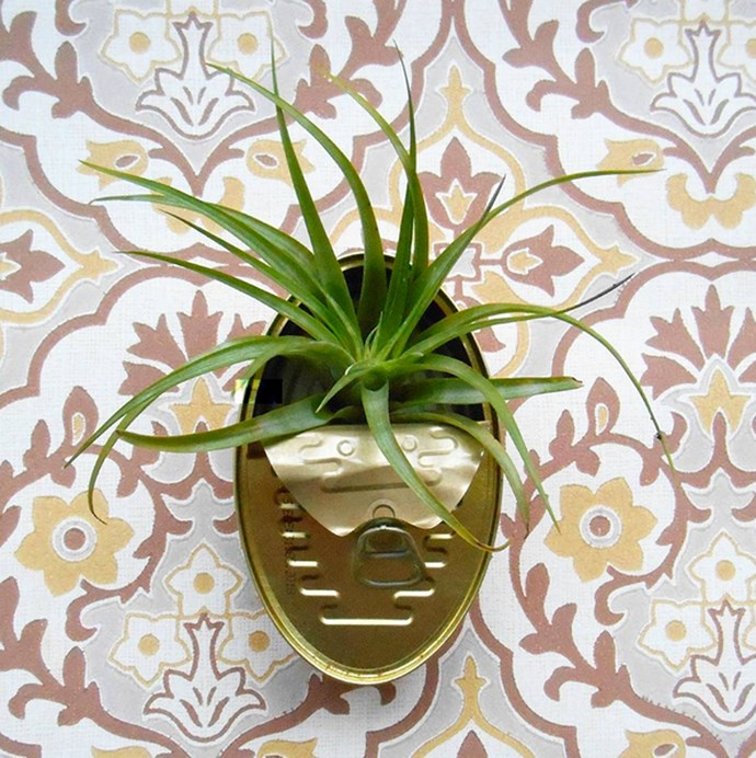Unpack those sardines and revamp their old home for air plants and cacti - you can even attach these cans to your walls. Find retro containers on [Etsy](https://www.etsy.com/market/sardine_cans). Image via [hipaholic](https://www.instagram.com/hipaholic/?hl=en).