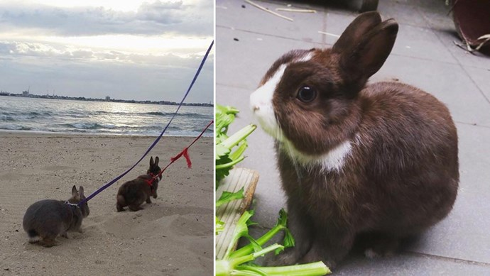 Meet Pudding, Party Pie and Percy - three Netherland Dwarf rabbits who live in Melbourne, Australia. They love long walks on the beach and celery snacks. More of their rabbity adventures [@partypie\_pudding\_percy](https://www.instagram.com/partypie_pudding_percy/)