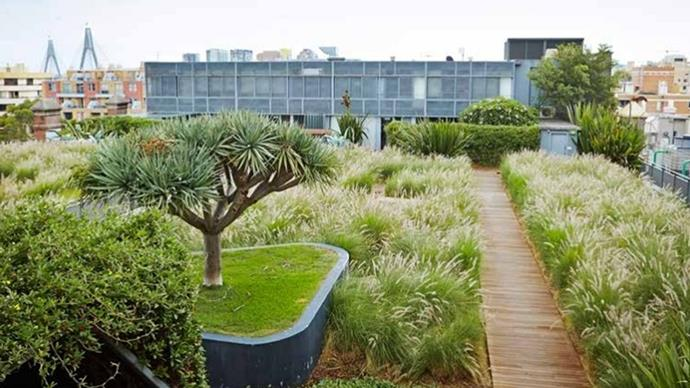 Photographer: Green Roofs Australasia