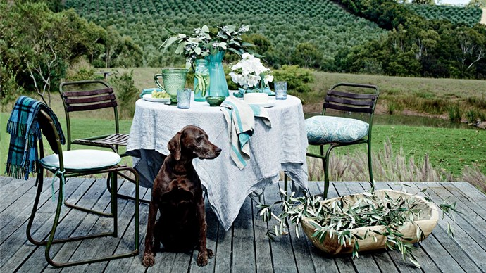 The key to transforming an outdoor zone into a useable living space is to mix soft furnishings and all-weather textiles. Think cushions, tablecloths, throws, draped fabrics and rugs. Coco, a German shorthaired pointer who was adopted from the RSPCA, agrees. | Photo: Mark Roper
