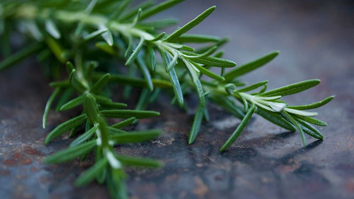 Rosemary. This herb adds a rustic charm paired with wildflowers or cottage style blooms, such as hyacinths, roses and sweet peas. Create a garden setting at your reception by potting it in rustic wooden crates or little glass jars.