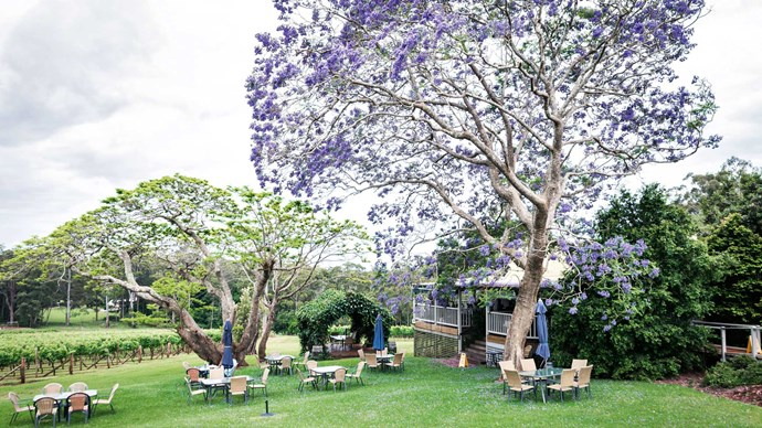 Under the purple haze of a jacaranda tree, visitors to the [Little Fish Café](http://littlefishcafe.com.au/), set within Innes Lake Vineyards on The Ruins Way, enjoy a French-inspired menu crafted with local produce. Look for the creamy seafood casserole pie. | Photo: Michael Wee