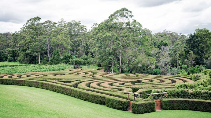 Test your instincts at [Bago Maze and Vineyards](http://www.bago.com.au/bago-maze/) – the largest hedge maze in Australia – then shout the winner a verdehlo at the cellar door. | Photo: Michael Wee