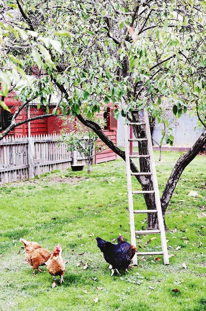 Liz's husband built a chook house from a window discarded in a demolition yard.