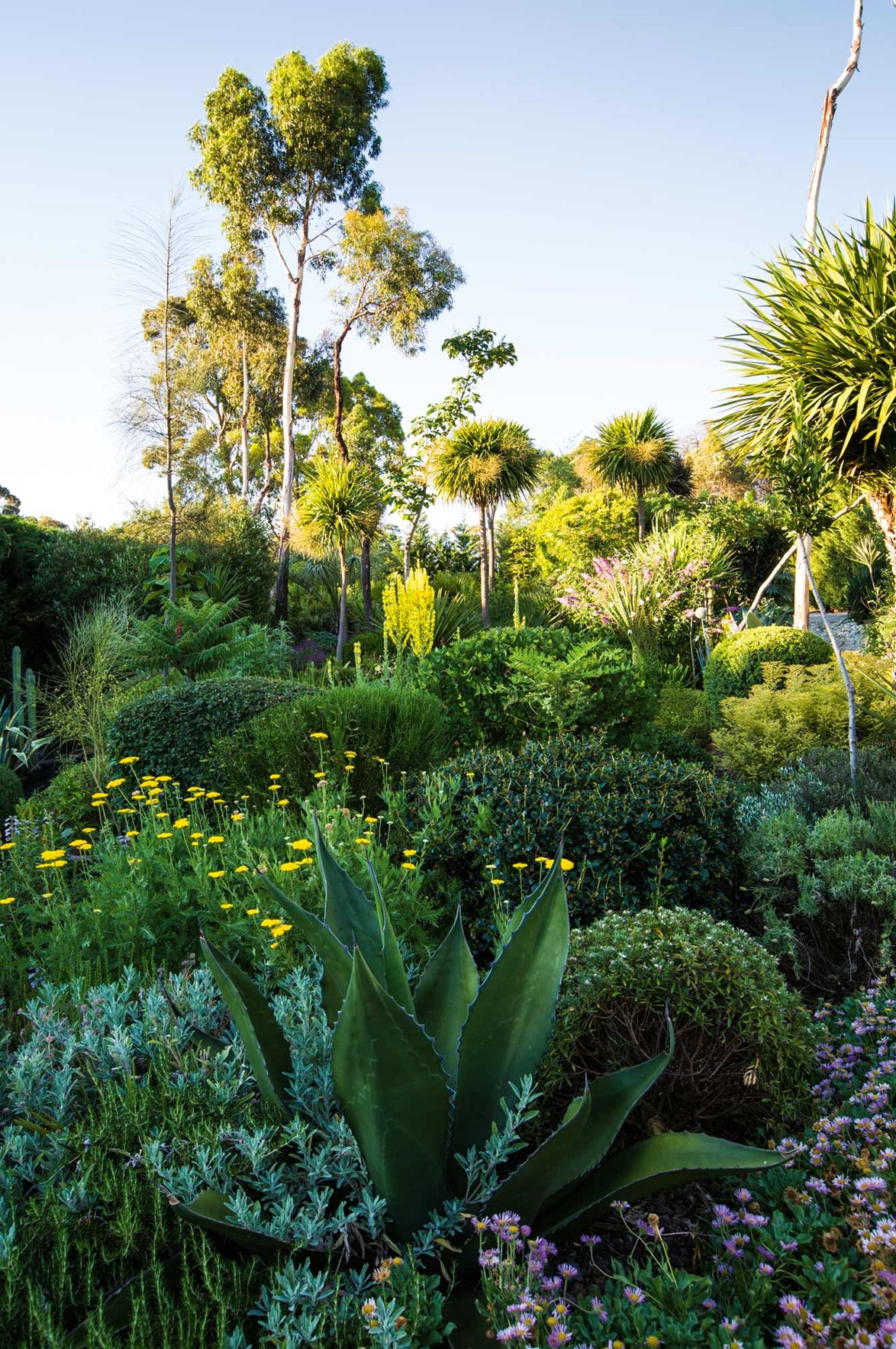 """Every inch of this [front garden featuring a variety of succulents](https://www.homestolove.com.au/front-yard-succulent-garden-13749