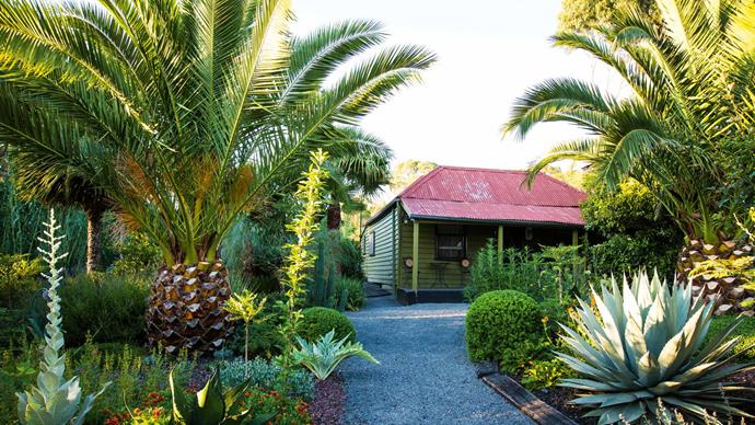 "[Tropical plantings](https://www.homestolove.com.au/tropical-plants-for-australian-gardens-19309|target=""_blank"") such as date palms not only add a vertical element to your garden, they're also great for sheltering low shrubs and succulents."