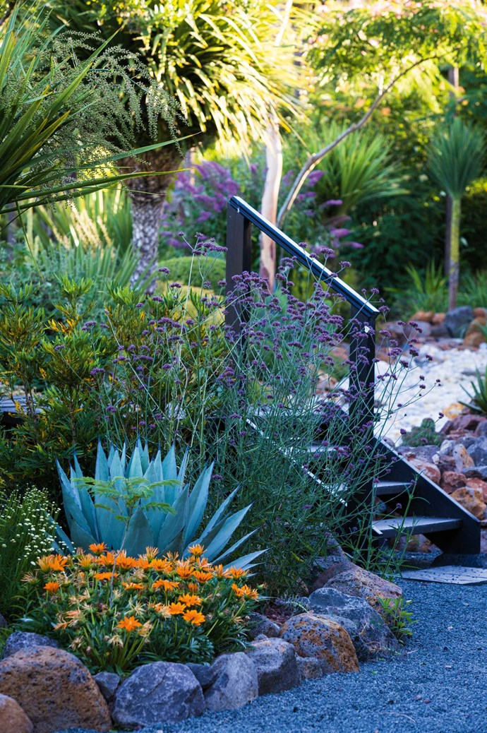Steps lead the garden visitor to discover more of Greg's rare and unusual plant choices.