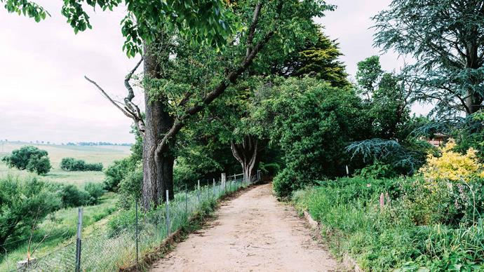 Monterey pines greet guests at the entrance drive. The road forks into two; the right fork encounters a magnificent 200-metre flower border, the left meanders down to Bombala River.