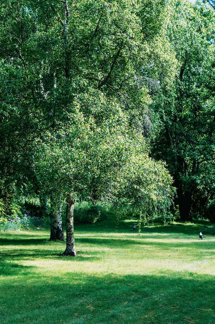 Silver birch trees offer shade.