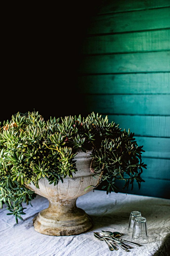 Plants from the garden direct the cool palette of the dining room.  | Photo: Kara Rosenlund