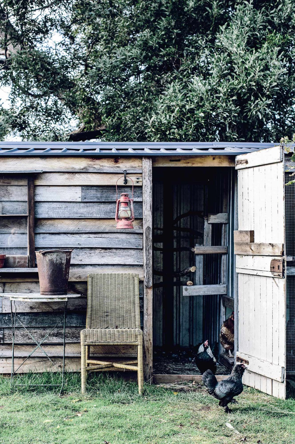 Recycled timber, old doors and corrugated iron are all great materials for building a rustic chook shed.