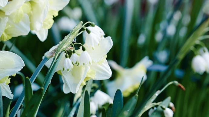 Sweet-scented jonquils fill the air with their perfume. To build the garden they envisioned, the couple began with a seasonal schedule that corresponded to a hand-drawn map of all the areas requiring work. They use it to this day.
