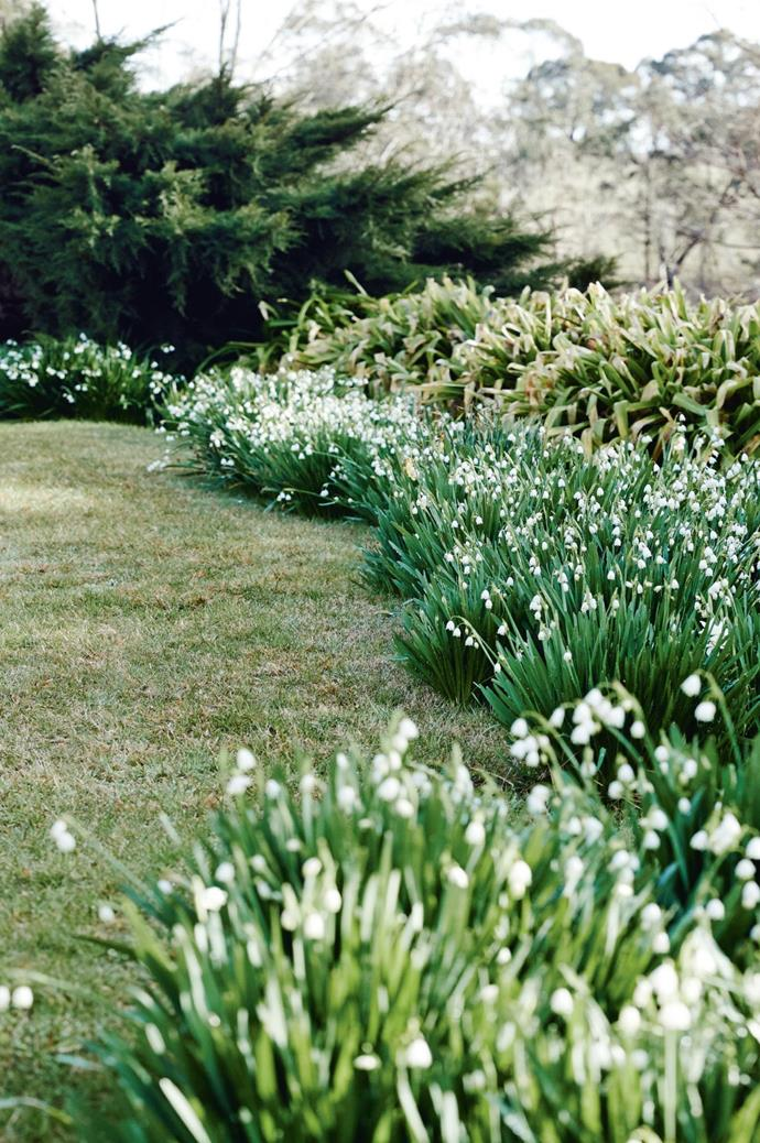 Snowflakes 'Leucojum' invite visitors for a stroll through the gardens.