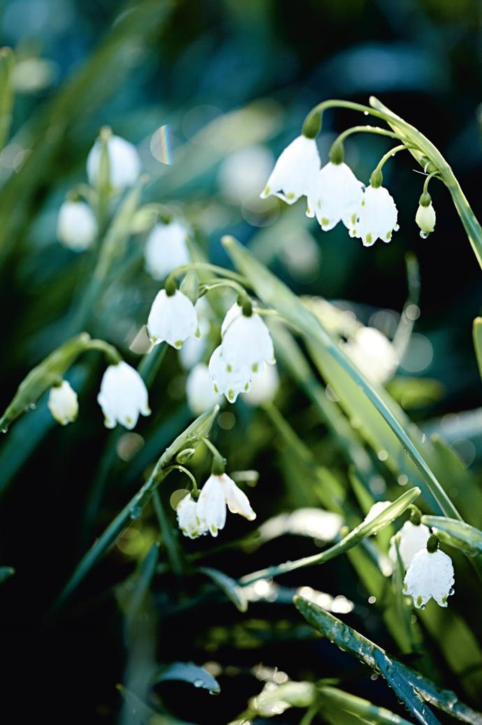 """The garden stays abloom all year round, with striking clusters of snowflakes flourishing during the winter season. """"I realised we had something beautiful here, and that I needed to know how to look after it,"""" Jo says."""
