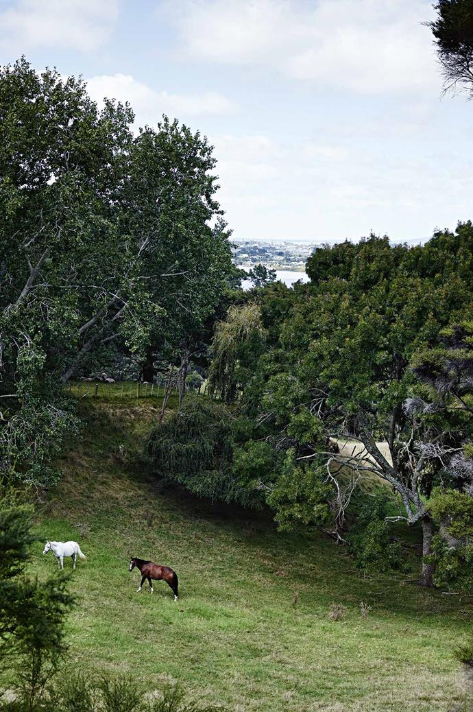 From its nest among the bush-clad slopes, the house overlooks Waitemata Harbour, with its eye fixed on Auckland's western suburbs. Flint, the grey pony, roams the paddock with High Five, a thoroughbred showjumper.