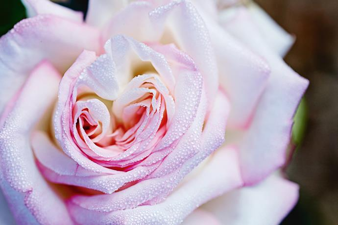 """Why grow roses, in particular? """"Other flowers are stunning. But you pick them and that's it. The rose keeps changing. It's the total romance. Most people remember the roses in their grandma's garden. It's truly a beautiful flower,"""" says Paula."""