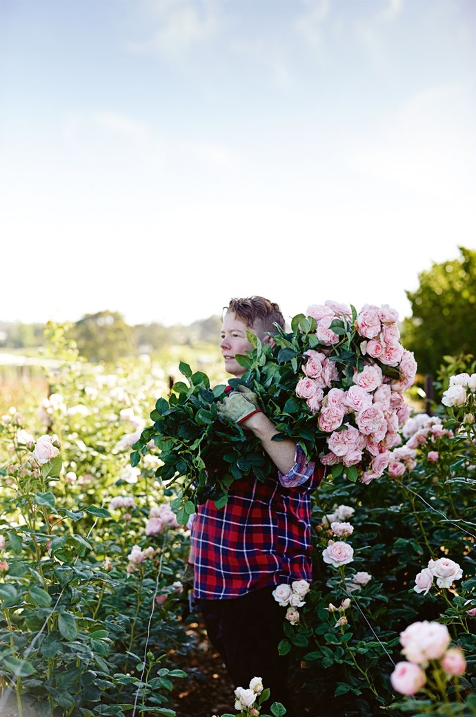 "Tam soldiers on with an armful of lush David Austin roses. She joined the business several years ago, after [escaping city life](https://www.homestolove.com.au/families-who-moved-to-country-australia-19642|target=""_blank"") and renting a house on the farm."