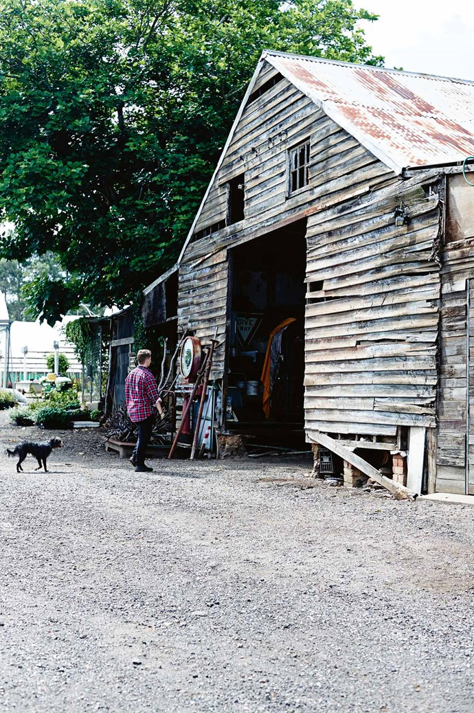The shed on the property is over 80 years old, and is always open to  furry-footed visitors.