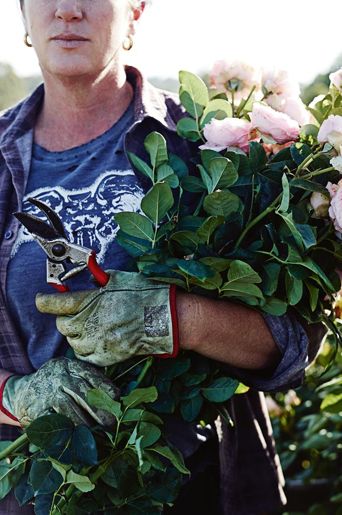 """Leather sleeves offer protection from thorns during the demanding work of rose picking. """"It's relentless. In summer you don't get a day off, but in a funny way, it feels like there's a lot of freedom. I have dogs and chickens, and I can wear flannelette and tracksuit pants every day!"""" Tam laughs."""