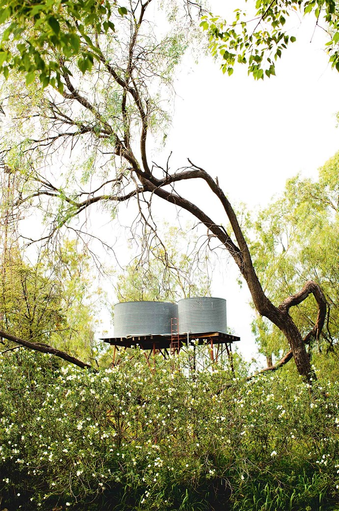 Water tanks peek above the garden thicket.