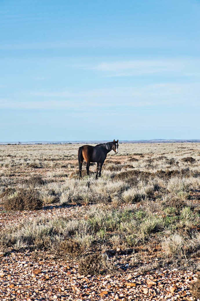 Learn more about Corner Country [here](http://outbacknsw.com.au). | Photo: Michael Wee