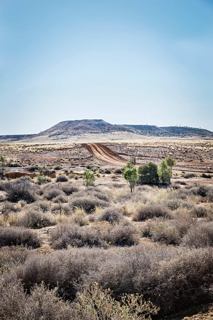 """In Sturt National Park, the """"Jump-Up"""" hill landforms are home to Aboriginal sites, kangaroos and are richly carpeted in wildflowers after generous rainfall."""