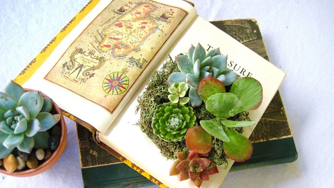 Knowledge grows from books. So do succulents! Image via [Pinterest](https://au.pinterest.com/pin/482870391269076824/).