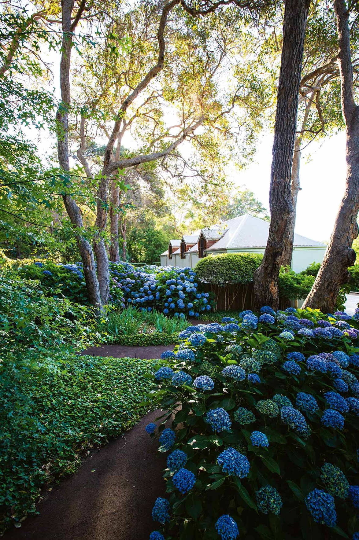 "With an abundance of 'something blue,' there's a reason this hidden [hydrangea garden](https://www.homestolove.com.au/hydrangea-garden-design-13870|target=""_blank"") in the Margaret River region of WA is a hit with local wedding planners."