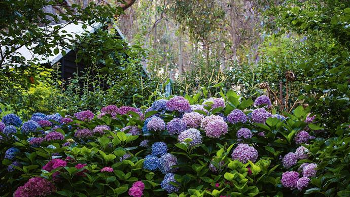 "Within a city of crabapple avenues and [wisteria-laden terraces](https://www.homestolove.com.au/magnificent-qld-garden-abloom-with-wisteria-and-rambling-roses-13978|target=""_blank""), Pat raises her hydrangea family. ""I want to increase my collection of unusual hydrangeas. They are my stand-out plant — they are sensational all through summer."""