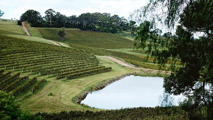 Rows of shiraz, semillon and charonnary grape vines punctuate the landscape surrounding Little Orchard Cottage in Mount View, NSW. *Photo: Mark Roper*
