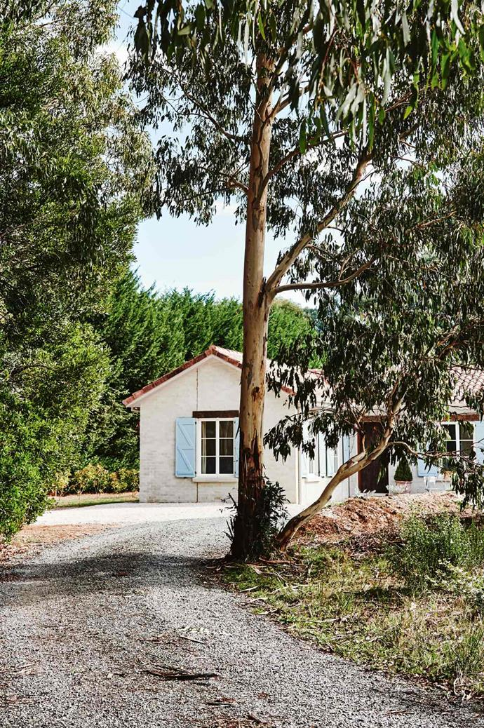 The pretty farmhouse and its pale blue shutters are visible through the branches of towering gum trees.