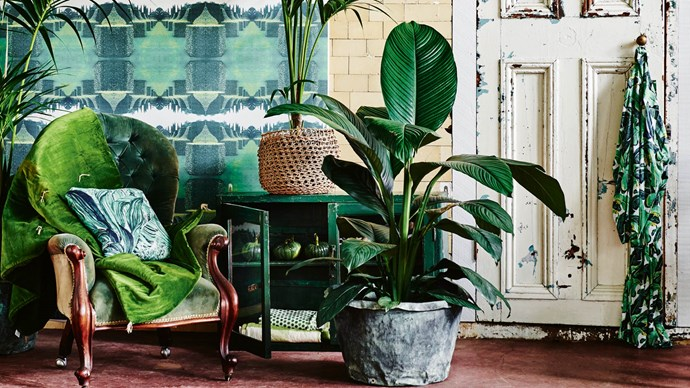 On the hunt for plant-inspired decor? Check out our holy grail of tips and tricks on [succulents, pot plants and terrariums](http://www.homelife.com.au/gardening/collections/a-guide-to-succulents). | Photo: Lisa Cohen