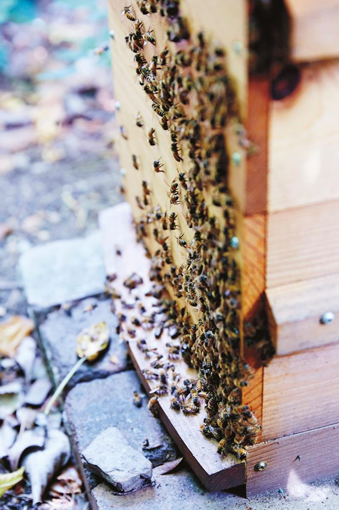 "You don't need to [have a beehive](https://www.homestolove.com.au/adding-a-bee-hive-to-your-garden-9890|target=""_blank"") to attract bees to your garden."