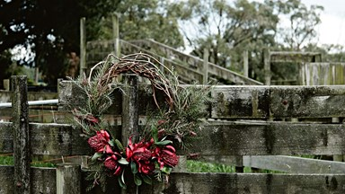 6 festive Australian native plants
