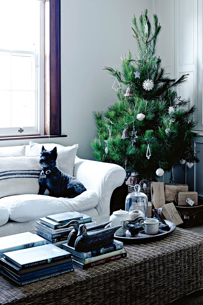 Amanda and her family (including Cairns terrier Lorrie, pictured) celebrate the festive season in her Georgian home, which sits on the hillside in East Launceston — with panoramic views towards the peaks of Mount Arthur, Mount Barrow and Ben Lomond. Their Christmas tree is from [Killiecrankie Farm](http://www.killiecrankie-farm.com/). | Photo: Mark Roper