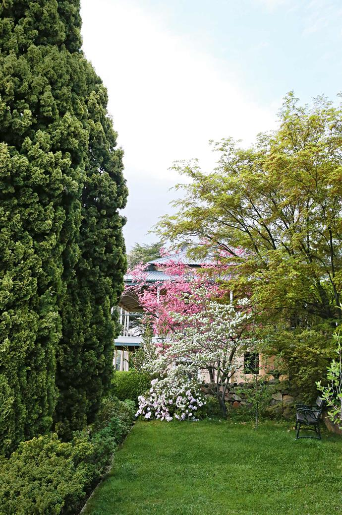 The long view to Lambrigg entices with azaleas, and pink and white flowering dogwoods.