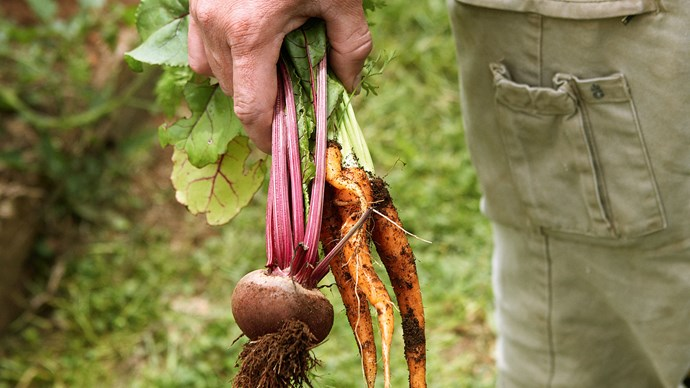 9\. Root vegetables. Plant parsnips, potatoes, carrots and [cabbage](http://www.homelife.com.au/recipe/cabbage,4579). | Photo: Chris Chen