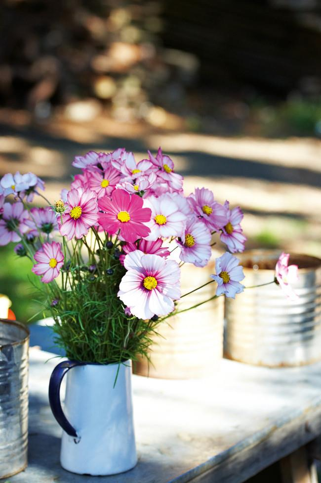 Cosmos fresh from the garden provide a backdrop for the family's juicing day on Sunday, where the family take turns at the handle of the wooden apple press, filling bottles with fresh juice for the week ahead.