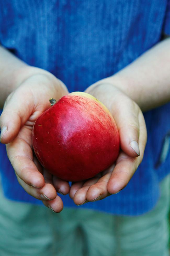 """A Tydeman's Early Worcester - """"One of the richest flavoured early apples"""", according to nursery owner Bob Magnus - is lovingly cradled by his grandson."""