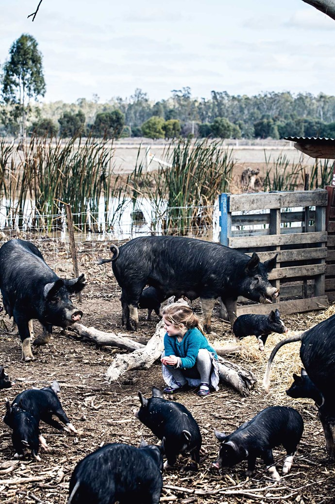 """Lucy gets acquainted with newest members of the Berkshire clan with a handful of feed. """"Berkshire boars are docile and always running with the girls,"""" says Lauren."""