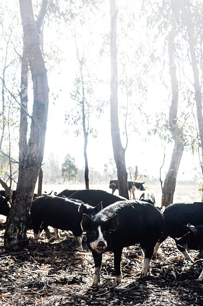Before the pair began Bundarra, the land surrounding their home hadn't been farmed for 20 years.