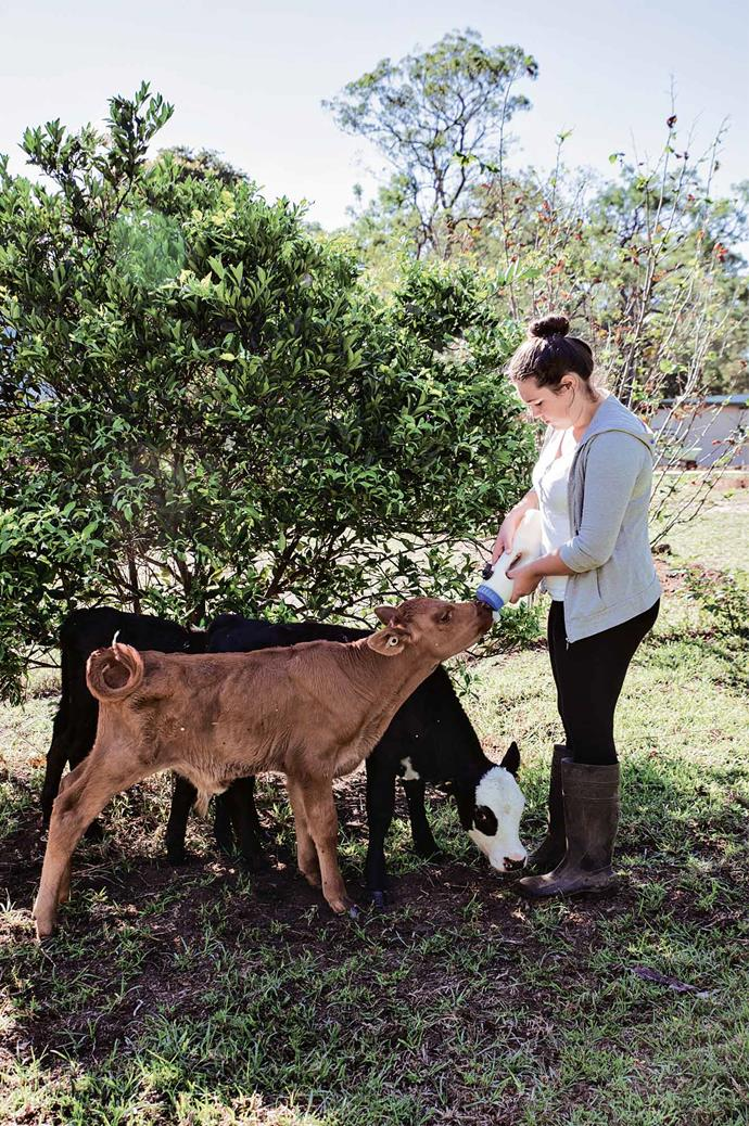 Isabella with two hungry calves.