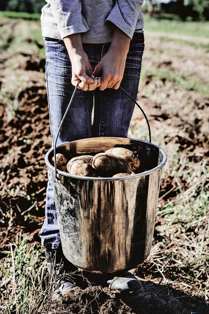 """Odelle with a bucket of Kennebec potatoes - """"a great roasting spud"""" according to her father."""